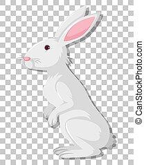 lapin blanc, transparent, dessin animé, fond, isolé