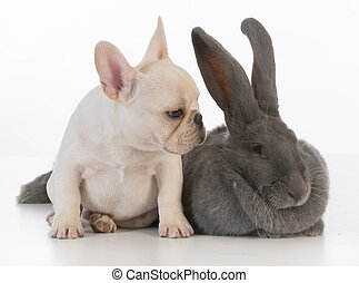 lapin, chien