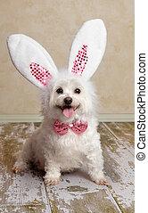 lapin, porter, oreilles, lapin, déguisement, chiot, chien