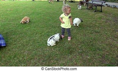 lapins, lapins, jardin, bouclé, cheveux, jeune, zoo, avoir, entre, amusement, girl