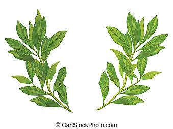 laurier, feuilles