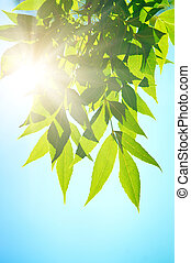 leafe, ensoleillé, day., vert