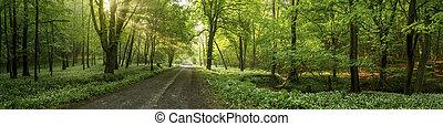 leaves., éclairé, arbres, rayons soleil, par, route