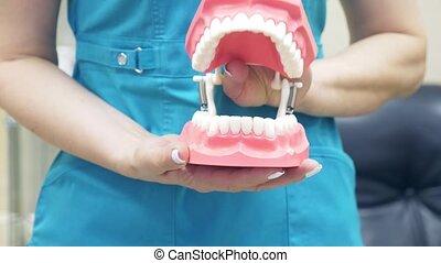 lent, aide, 4k, mouvement, dentiste, bouche, humain, jaw., modèle, structure, spectacles