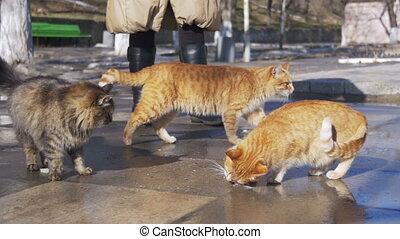 lent, femme, spring., rue, tôt, alimentation, sdf, chats, mouvement, pain