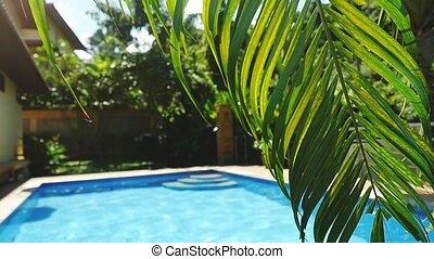 lent, feuille, motion., exotique, recours, paume, piscine, devant, 1920x1080, natation