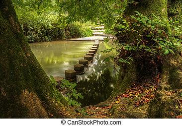 lent, ruisseau, vibrant, scène, enchanté, forêt, écoulement, réflexions