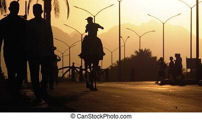 lent, silhouette, chameau, egypt., mouvement, bédouin, en mouvement, long, route, sunset.