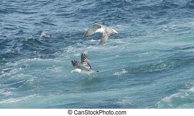 lent, sur, voler, mouettes, mouvement, mer