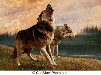 leur, loups, territoire, garde, vigilantly