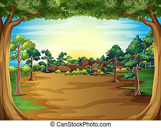 levers de soleil, arbres, forêt