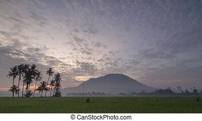 levers de soleil, bukit, mertajam., champ, paddy