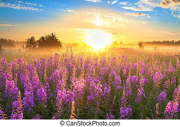 levers de soleil, floraison, paysage, pré