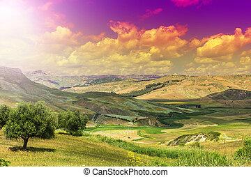 levers de soleil, sicile, olive, arbres