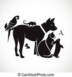 libellule, chien, groupe, animaux familiers, caméléon, perroquet, -, isolé, vecteur, fond, chat, lapin blanc, papillon