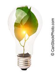 lightbulb intérieur, croissant, plante