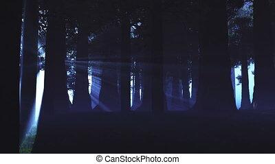 lightrays, surnaturel, forêt, 3