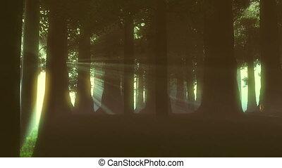 lightrays, surnaturel, forêt, 4