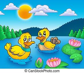 lillies eau, deux, canards