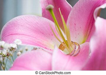lily., anneaux, mariage, pistil, paire