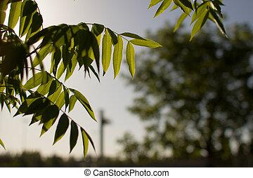 lit, saule, feuilles, arbre, dos