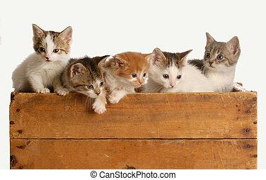 literie, cinq, chatons