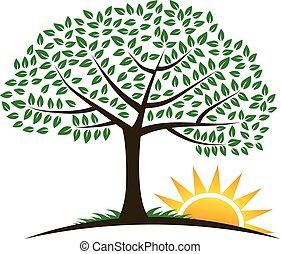 logo, vecteur, arbre, levers de soleil