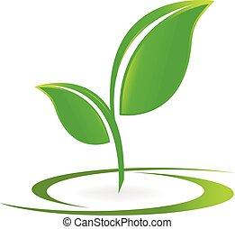 logo, vecteur, santé, pousse feuilles, nature