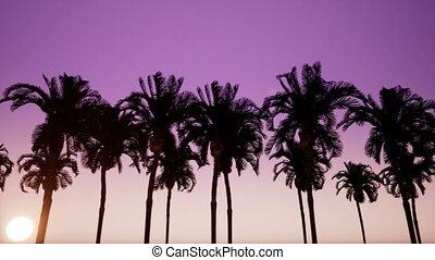long, palmiers, ruelle, mouvement