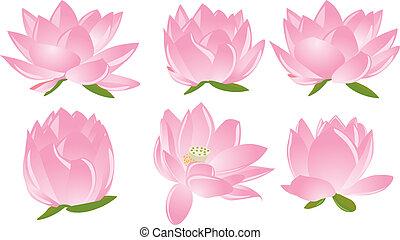 lotus(waterlily), illustration