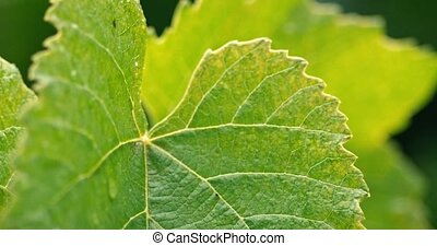 lourd, feuilles vertes, closeup, pluie