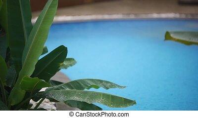 lourd, fleur, piscine, feuilles, foyer, pluie, chutes, changement, 1920x1080, blurred., natation