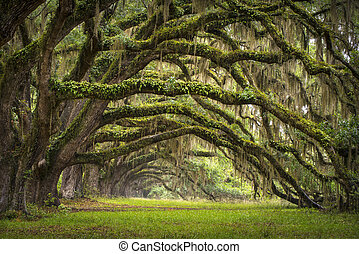 lowcountry, as, paysage, chêne, arbres, plantation, vivant, forêt, sc, charleston, chênes, avenue, bassin, caroline sud