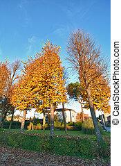 lucca, toscane, couleurs, automne