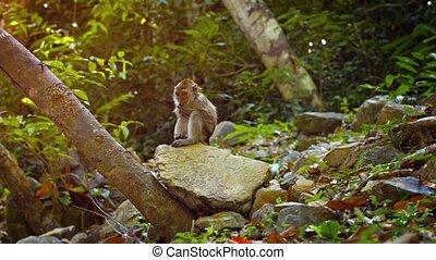 lui-même, singe, séance, rocher, quoique, grattements, adorable