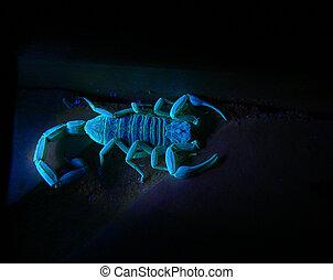 lumière, 3, scorpion, ultra-violet, sous