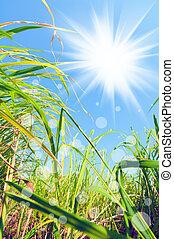 lumière, mauvaises herbes, sous