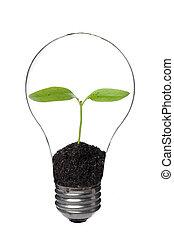 lumière, plante, intérieur, ampoule