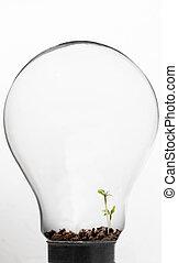 lumière, plante, petit, ampoule, intérieur