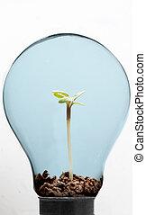 lumière, sol, plante, ampoule, intérieur