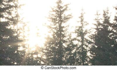 lumière soleil, flamme, neige, lent, forêt