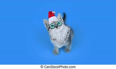 lunettes, mignon, santa, bleu, chaton, chapeau, barbe
