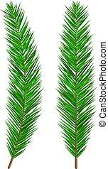 luxuriant, arbre vert, branch., impeccable, arbre vert, sapin