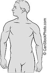 mâle, figure humaine, contour