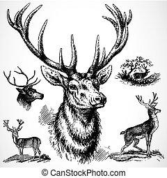mâle, vecteur, cerf