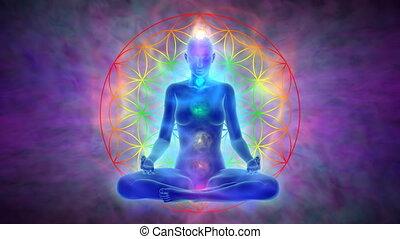 méditation, fleur, -, vie