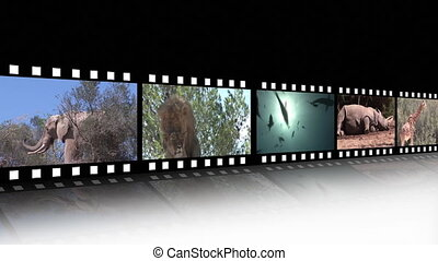 métrage, collage, vie sauvage