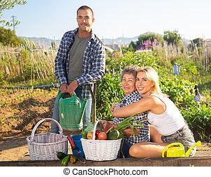 mûre, légumes, famille, heureux, récolte, jardin
