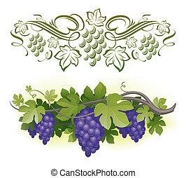 mûre, &, -, vigne, illustration, calligraphic, vecteur, decorarative, raisins