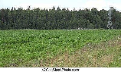 maïs, pesticide, ferme, pulvérisation, field., 4k, herbicide, tracteur